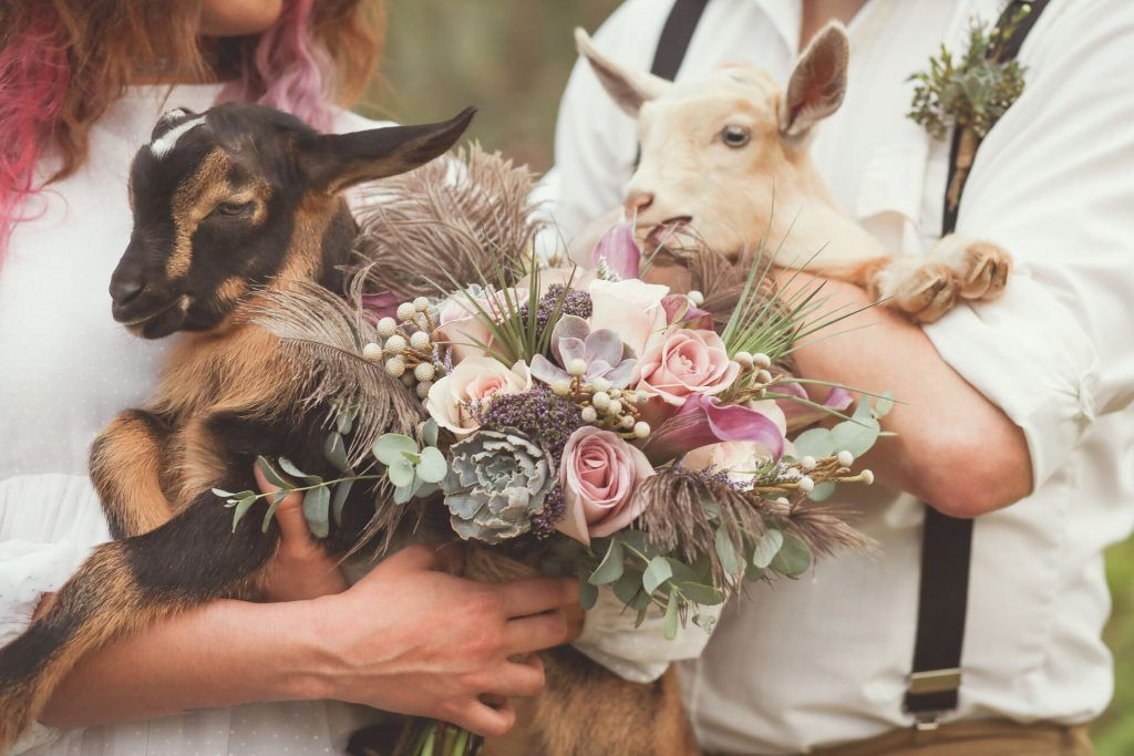 floral and sheep